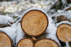 PHOTO - wood-3163292_640